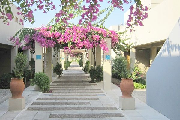 Flowering vine plants to decorate your house and garden flowering vine plants decorate mightylinksfo
